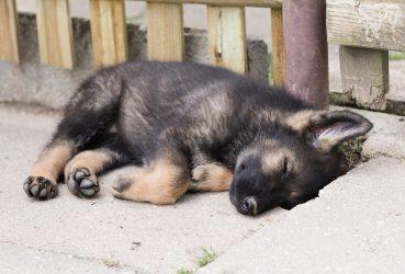 WLK115: Shepherds Need Rest Too