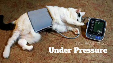 WLK120: Under Pressure