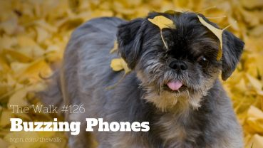WLK126: Buzzing Phones