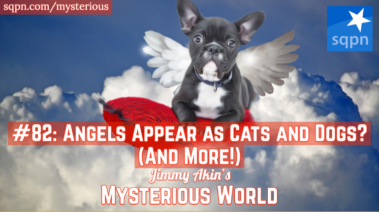 Can Angels Appears as Dogs and Cats? (And More Weird Questions)